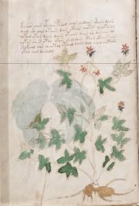 Folio5v