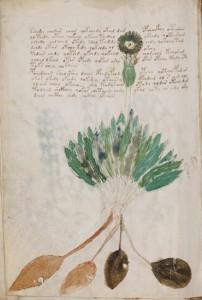 Folio94v