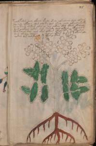 Folio95rThumb