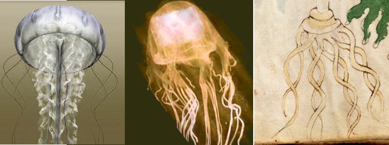 JellyfishRoot