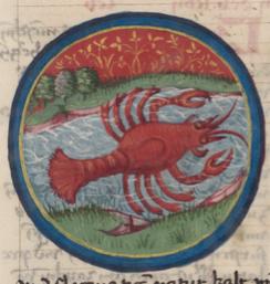 SchuerstabCrab