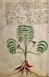 Plant66vThumb