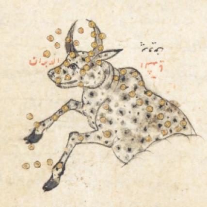 ArabBull