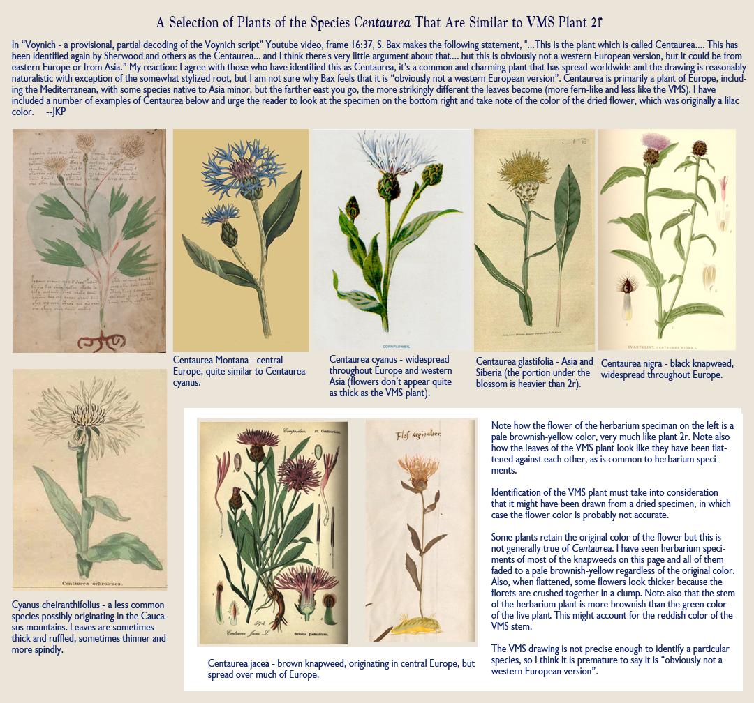 [Image: CentaureaSpecies.png]