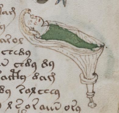 VMS drawings of nymphs in flying loges