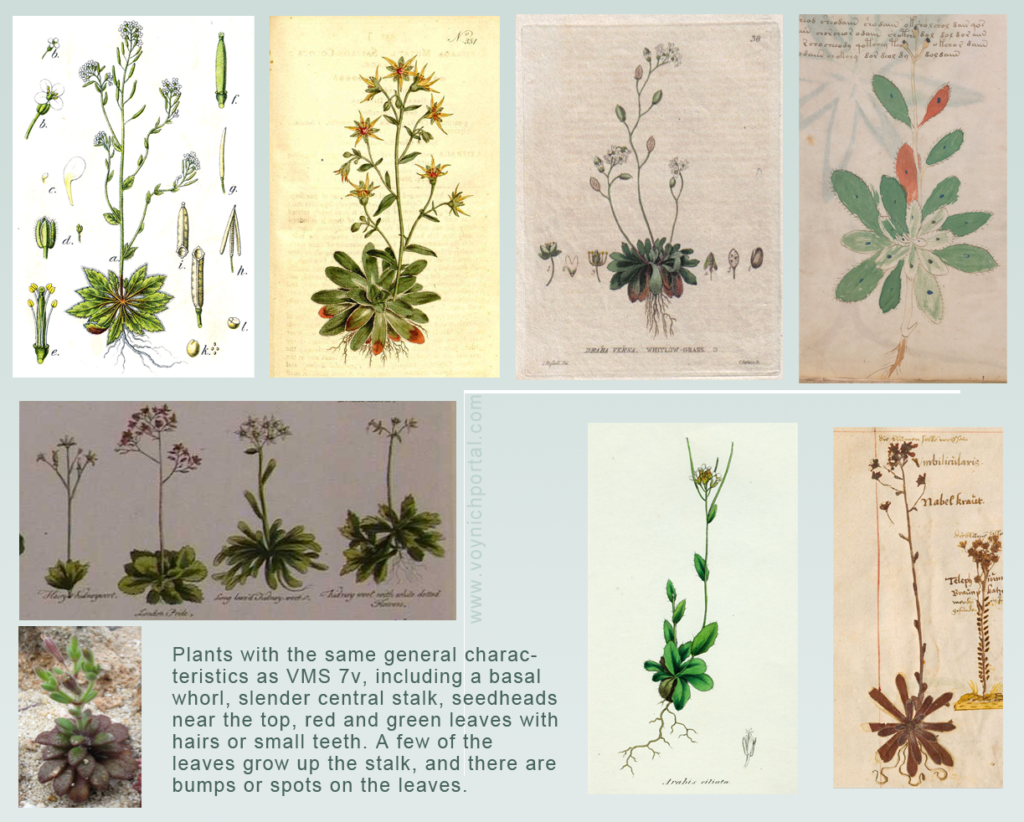 Examples of Saxifrage, Draba, Arabis, Silene, Limonium basic plant shapes, all of which are fairly similar in general form.