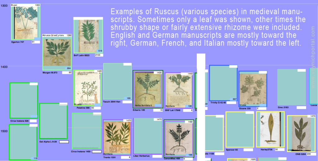 Exampls of medieval Ruscus